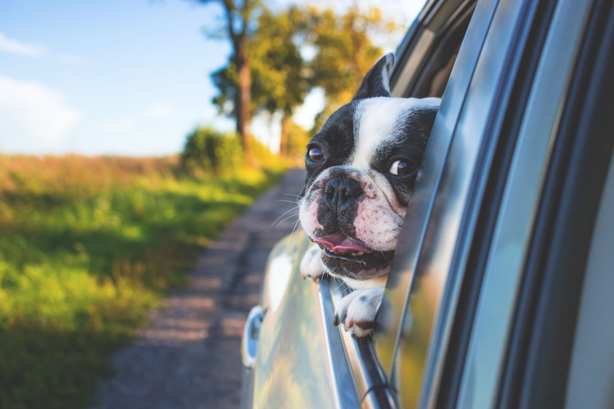 image showing a dog looking out a car window while driving